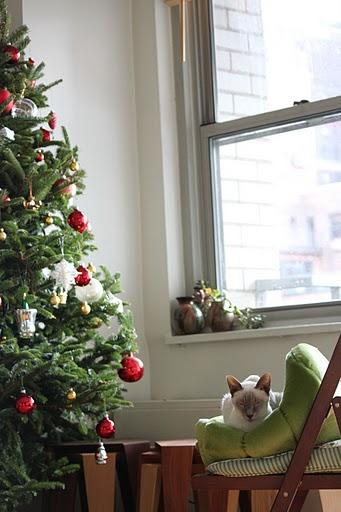 クリスマスツリーとココア_f0095325_1144727.jpg