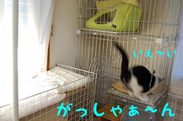 c0181639_145272.jpg