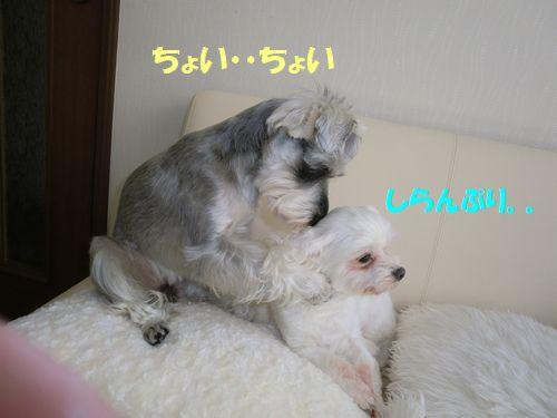 b0206444_057698.jpg