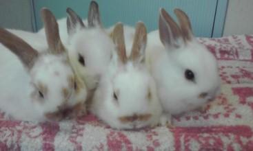 子ウサギ、大きくなりました_a0061845_21334892.jpg