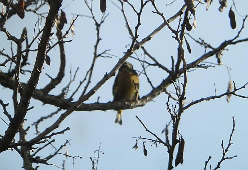 多摩川で野鳥観察会_f0059673_214179.jpg