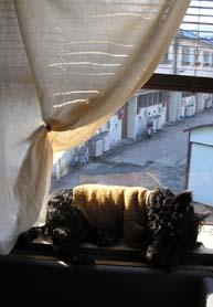 お疲れセーター犬_e0055098_18105565.jpg