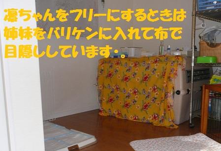 f0121712_12134565.jpg