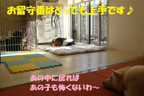 f0121712_1305562.jpg
