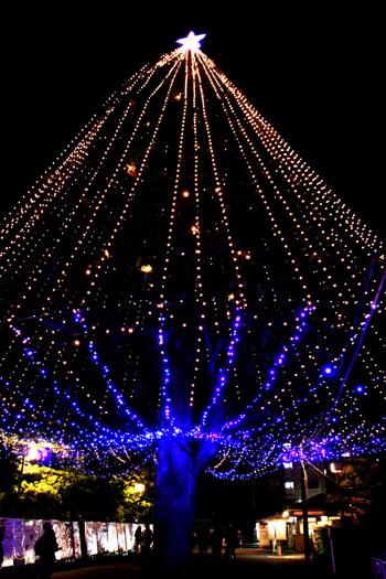 同志社大学 クリスマスツリー_e0048413_221753100.jpg