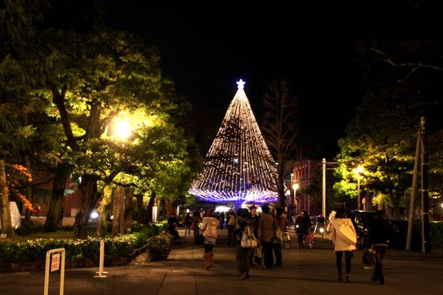 同志社大学 クリスマスツリー_e0048413_22194210.jpg