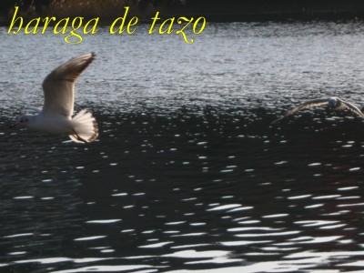 f0155614_1705391.jpg