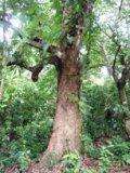 タラング島の歴史_a0043520_14115523.jpg