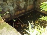 タラング島の歴史_a0043520_1454462.jpg