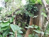 タラング島の歴史_a0043520_1494672.jpg
