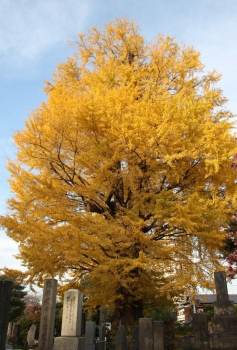 銀杏の樹の下に_f0055131_10142163.jpg