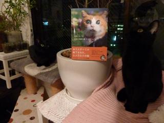 天使になった全盲の奇跡の猫チョキちゃん猫 のぇるろった編。_a0143140_21493641.jpg