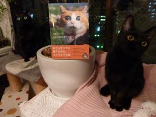 天使になった全盲の奇跡の猫チョキちゃん猫 のぇるろった編。_a0143140_2149479.jpg