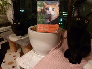 天使になった全盲の奇跡の猫チョキちゃん猫 のぇるろった編。_a0143140_2150781.jpg