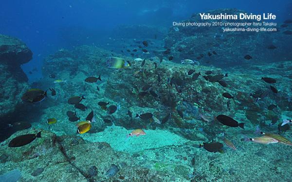 竹島で沈船発見!_b0186442_18452839.jpg