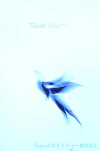 ■■ Blue bird ~3 years~ ■■_c0195662_23405217.jpg