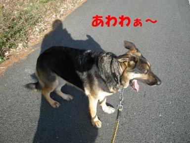 b0113663_9551830.jpg