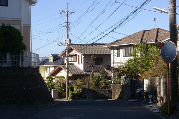 鎌倉の美しい里山継承プロジェクトを11・1・22からスタート_c0014967_1545615.jpg