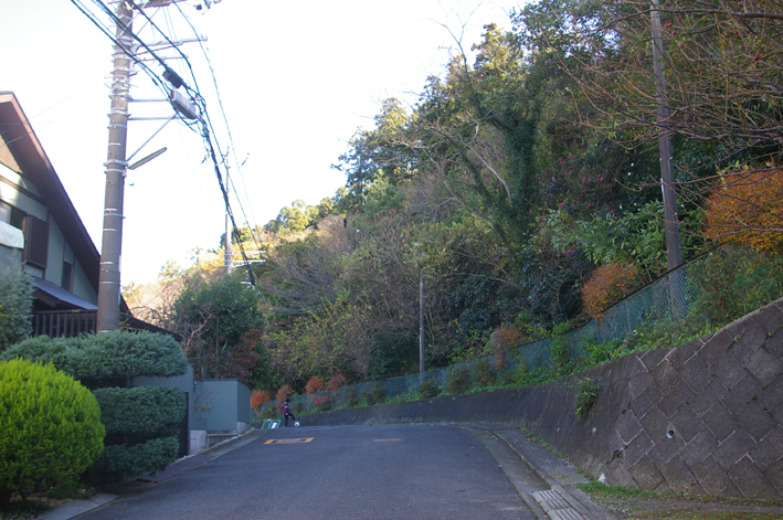 鎌倉の美しい里山継承プロジェクトを11・1・22からスタート_c0014967_1554958.jpg