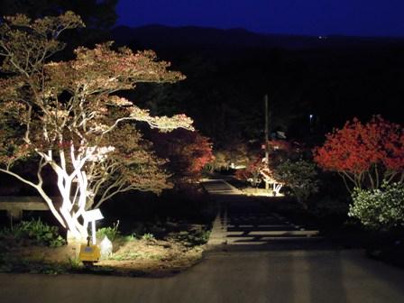 東京~陶炎祭(ひまつり)~夜つつじ_f0229883_18505643.jpg