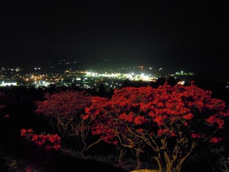 東京~陶炎祭(ひまつり)~夜つつじ_f0229883_1851991.jpg