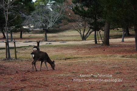 奈良公園で写んぽ♪_d0148187_23293682.jpg