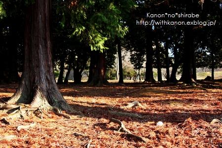 奈良公園で写んぽ♪_d0148187_23301372.jpg