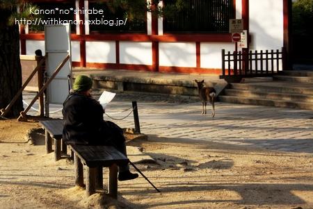 奈良公園で写んぽ♪_d0148187_23302341.jpg