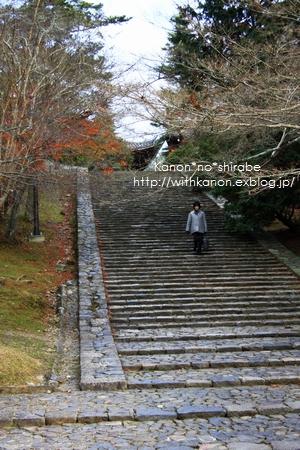 奈良公園で写んぽ♪_d0148187_2330363.jpg
