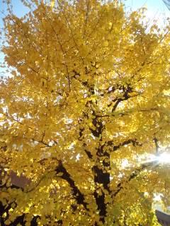 きれいな葉っぱ。_f0143188_11292852.jpg