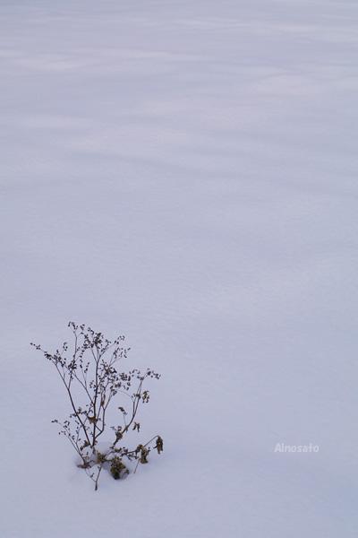 今日の雪景色_b0103798_5325811.jpg