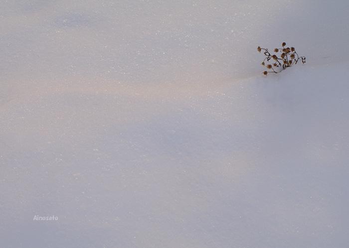 今日の雪景色_b0103798_53352.jpg