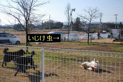 f0109202_1055967.jpg