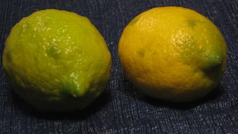 Lemon_f0146802_1356035.jpg