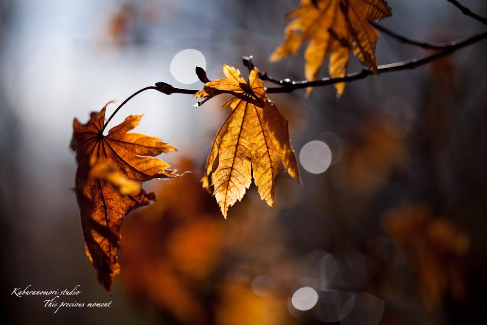 初冬の夕暮れ_c0137403_2355378.jpg