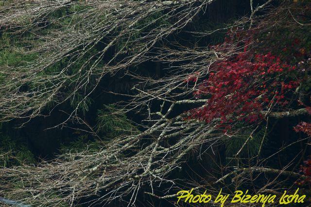 『流樹』 _d0086248_6473714.jpg