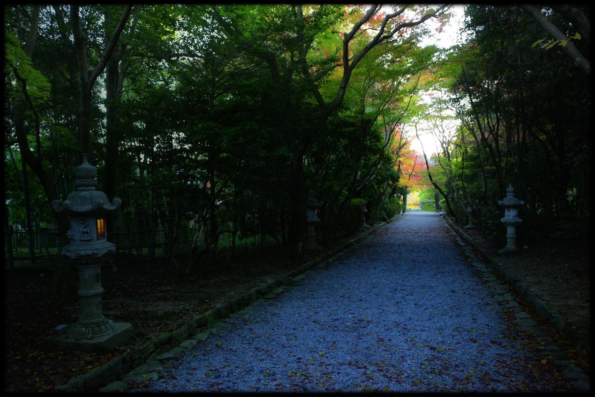 紅葉 2010 <大原野神社> 5_f0021869_5475549.jpg