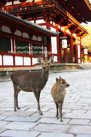 奈良東大寺_d0148187_17432345.jpg