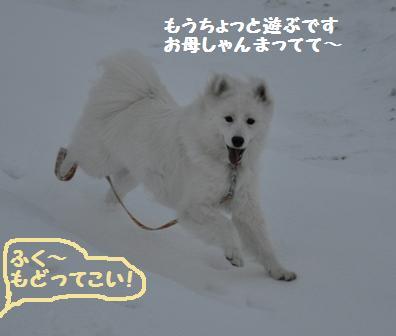f0212597_11494759.jpg