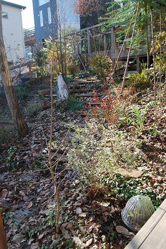 12月の庭…_c0124100_17543719.jpg
