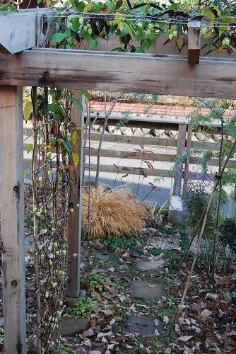 12月の庭…_c0124100_17563777.jpg