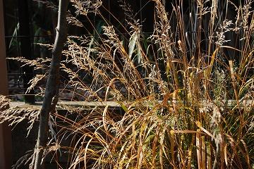 12月の庭…_c0124100_175724100.jpg