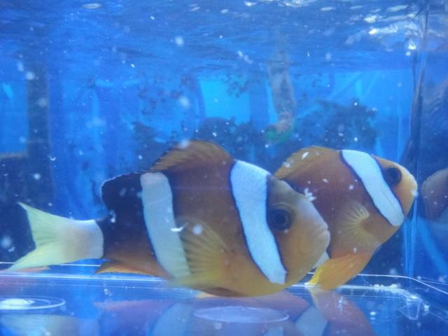海水魚・サンゴ・水草・淡水魚_f0189122_13143813.jpg