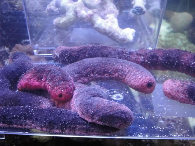 海水魚・サンゴ・水草・淡水魚_f0189122_13244312.jpg
