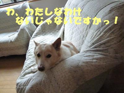 b0138430_2005159.jpg
