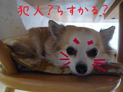 b0138430_200698.jpg