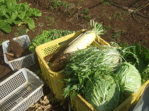 野菜畑に霜が...._b0137932_15311335.jpg