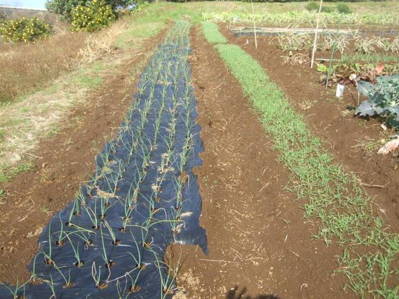 野菜畑に霜が...._b0137932_15314858.jpg
