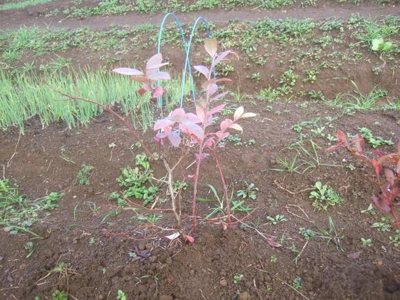 野菜畑に霜が...._b0137932_15501650.jpg