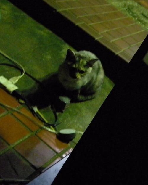 夜猫_e0089232_2126512.jpg